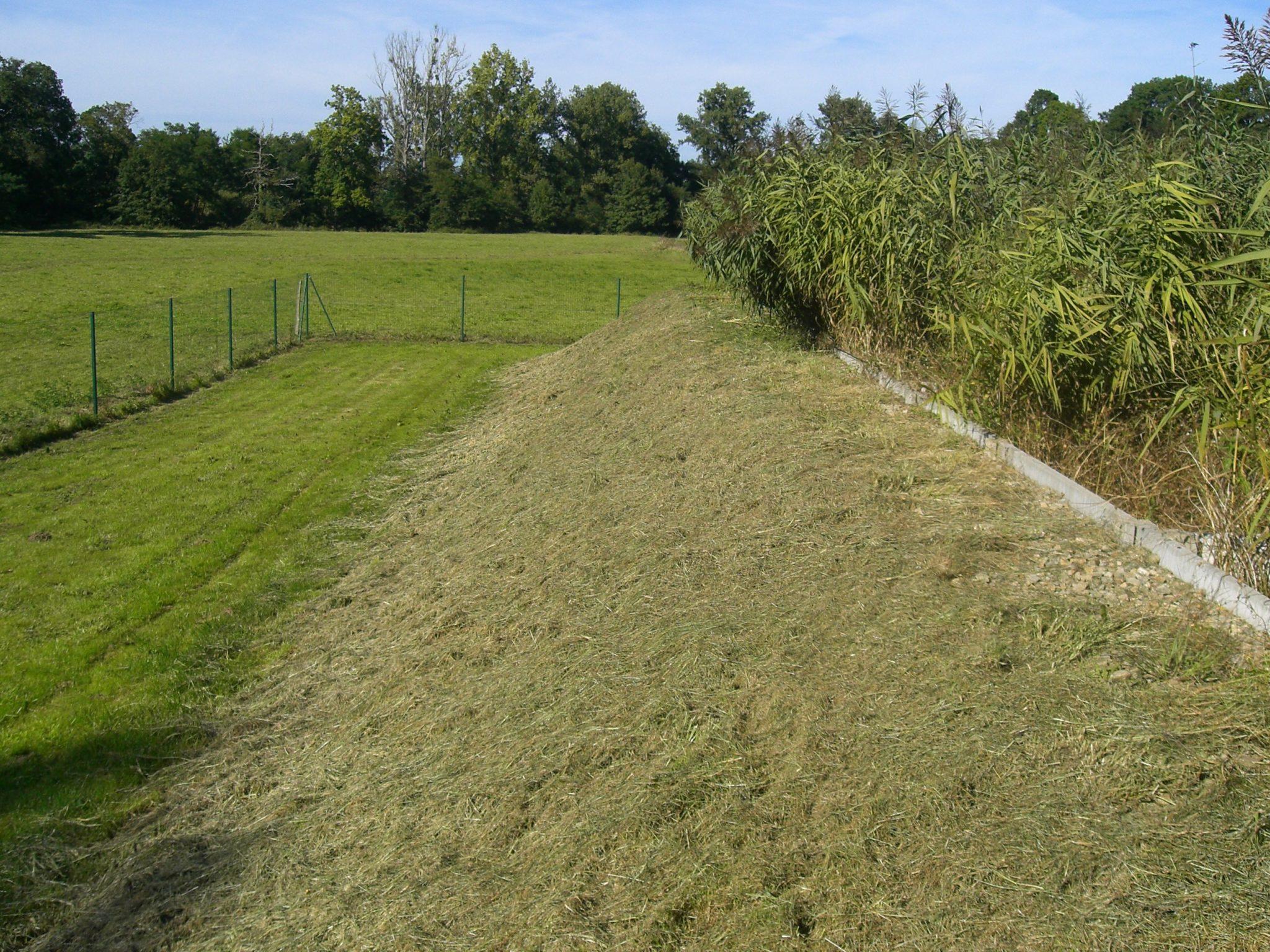 assainissement collectif des eaux usées - filtres roseaux