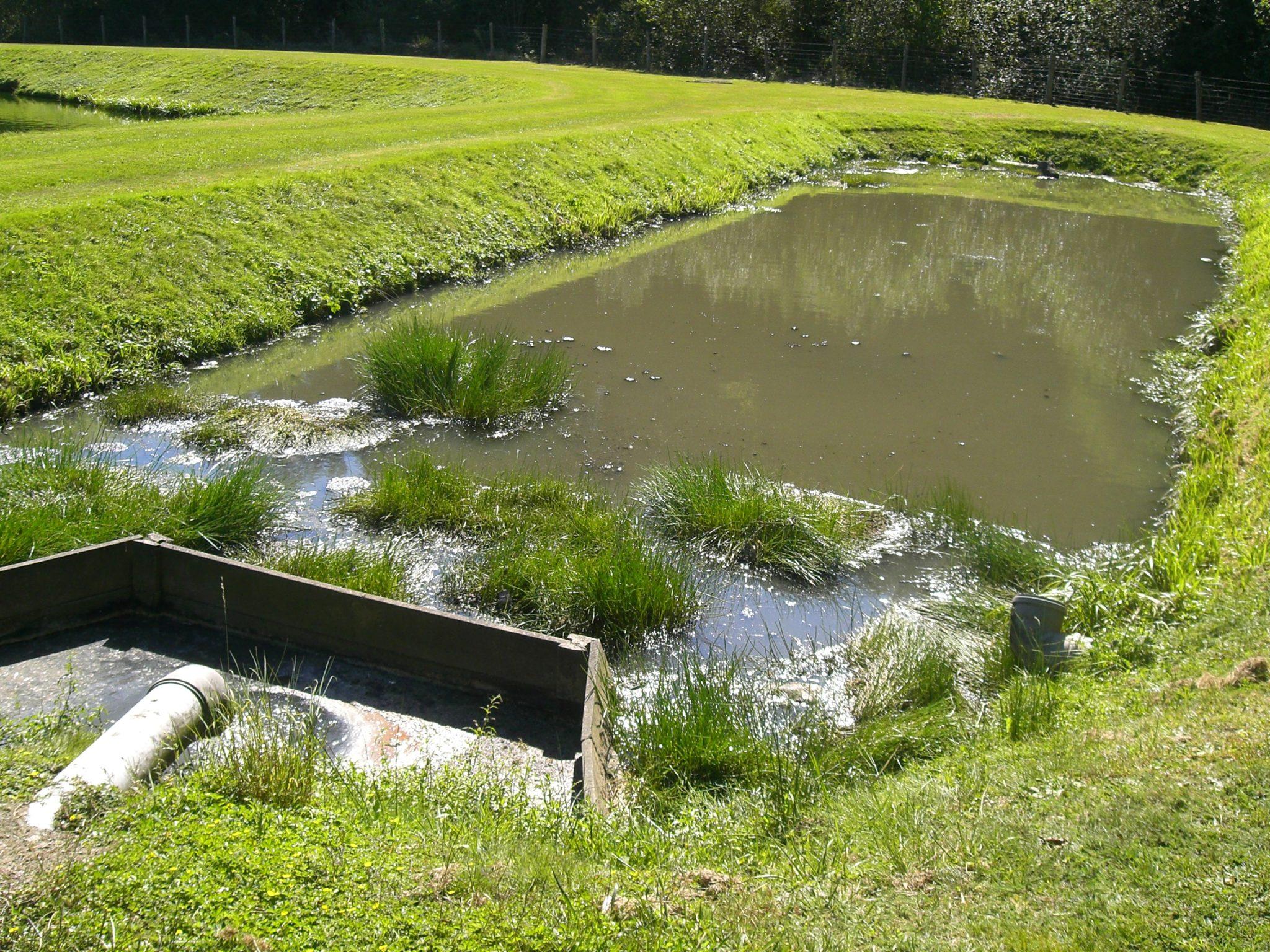 assainissement collectif des eaux usées - lagune